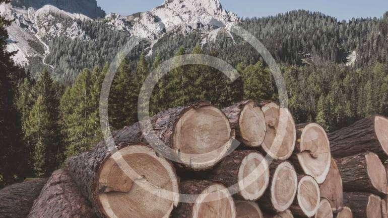 Lodgepole pine custom patterns